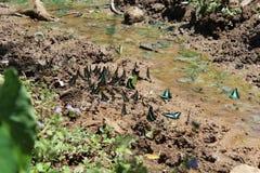 Groep vlinders op de klei nabijgelegen waterval stock afbeelding