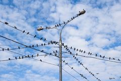 Groep vogel Stock Foto