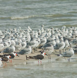 Groep Vogels Royalty-vrije Stock Foto