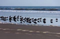 groep vogels royalty-vrije stock afbeeldingen