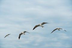 Groep vogels die op wolk en hemel glijden Stock Afbeelding