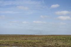 Opstijgende vogels in Westhoek, Birds taking off at Westhoek stock image