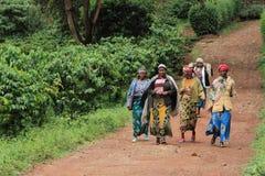 groep vrouwen die in koffieaanplanting werken stock afbeeldingen