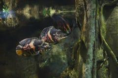 Groep weinig grote vissen in aquarium met installatie, achtergrondprentbriefkaarmening Stock Afbeeldingen