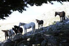 Groep Wild paard Royalty-vrije Stock Afbeeldingen