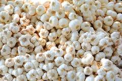 Groep witte de textuurachtergrond van knoflookstapels, mooi van droog voedsel royalty-vrije stock afbeeldingen