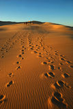 Groep in woestijn Royalty-vrije Stock Foto