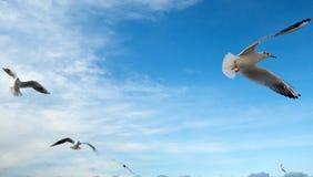 Groep zeemeeuwen Stock Afbeelding