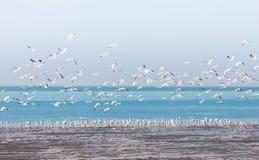 Groep zeemeeuwenvlieg over waterspiegel Stock Afbeelding