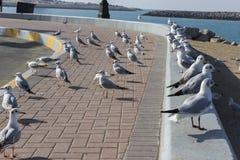 Groep zeemeeuwvogels status Stock Afbeeldingen