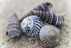 Groep zeeschelpen op een zandige achtergrond Stock Fotografie