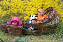 Groep zuigelingsbabys in mand stock afbeeldingen