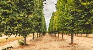 Groepering van bomen in een Franse tuin stock afbeeldingen