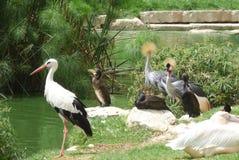 Groepering van Exotische Watervogels en Waadvogelvogels Stock Afbeeldingen