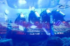 Groepsduikers onderwater Stock Afbeeldingen