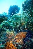 Groepsscuba-duiker in water. Royalty-vrije Stock Afbeeldingen