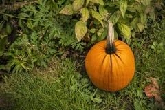 Großer Herbstkürbis Lizenzfreie Stockbilder