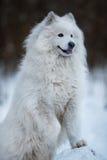 Großer Hund, der auf der Vorderpfote steht Stockbild