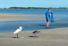 Großer weißer Reiher im Erwachsenen und jugendliche Farbe stehlen fisherm Stockfotografie