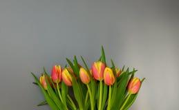 Groetkaart met tulpen tegen lichtgrijze muurachtergrond Rode en gele tulpen bij de bodem van het kader Exemplaarruimte voor royalty-vrije stock fotografie
