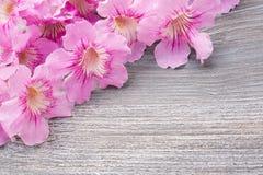 Groetkaart met uitstekende bloemen Royalty-vrije Stock Fotografie