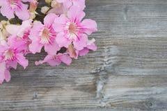 Groetkaart met uitstekende bloemen Stock Foto's