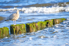 Groin in the Baltic Sea Royalty Free Stock Photos