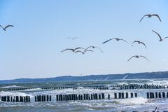 Groins in the Baltic Sea with gulls Royalty Free Stock Photos