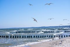 Groins in the Baltic Sea with gulls Stock Image
