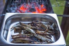 Gromadnik - mała ryba na metalu protvin Dobra przekąska dla piwa zdjęcia royalty free