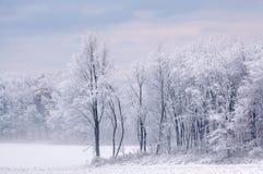 gromadzący się śnieżni drzewa zdjęcia stock
