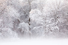gromadzący się śnieżni drzewa fotografia royalty free