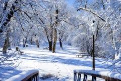 Gromadzący się stoły, ławka i drzewa, zdjęcie royalty free