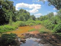 GROMADZĄCY WODNY Z ZIELONĄ roślinnością PO deszczów zdjęcia stock