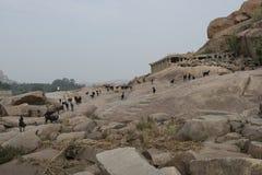 Gromadzić się kózki w Hampi, India Zdjęcie Royalty Free