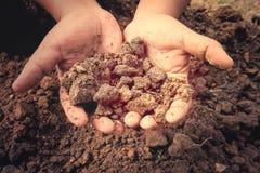 Gromadzi glebowego w ręki mieniu bardzo mocno Fotografia Stock