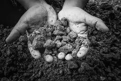 Gromadzi glebowego w ręki mieniu bardzo mocno Zdjęcia Royalty Free