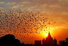 GROMADZI SIĘ I ĆWIERKA ptaki W EVENING BIKANER zdjęcie royalty free