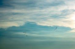 Gromadzi się ptaki lata w niebie obrazy stock