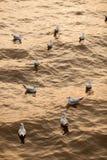 Gromadzi się Seagull na wodzie Zdjęcia Royalty Free