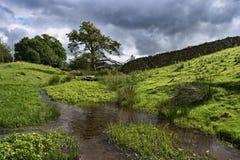 gromadzki angielski jeziorny mały strumień Zdjęcie Stock