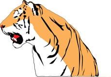 Grommende tijger Stock Afbeelding