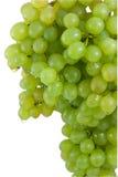 gron winogrona zielenieją dojrzałego Zdjęcie Royalty Free
