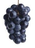 grona błękitny winogrono Fotografia Royalty Free