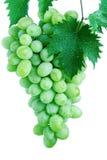 grona winogrona zieleń opuszczać winogradu obraz stock