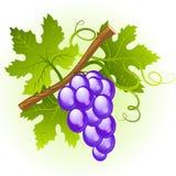 grona winogrono Fotografia Stock