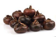 Grond chesnut, Chinese waterkastanjes: de fruitinwoner van Thailand heeft geneeskrachtige eigenschappen Stock Foto