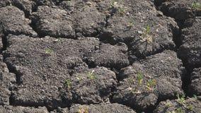 grond die door droogte is gebarsten stock videobeelden