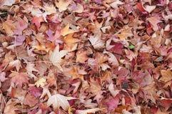 Grond die met liquidambar sweetgumbladeren wordt behandeld Royalty-vrije Stock Afbeeldingen