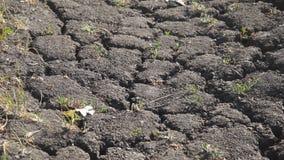 Grond door droogte is gebarsten die stock videobeelden